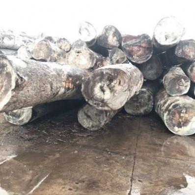 批发供应塔立原木 塔立原木板材加工 工程防腐木料现货